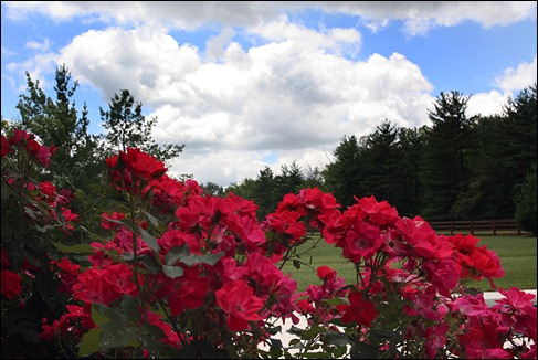 rosesandsky100606