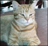 catimage