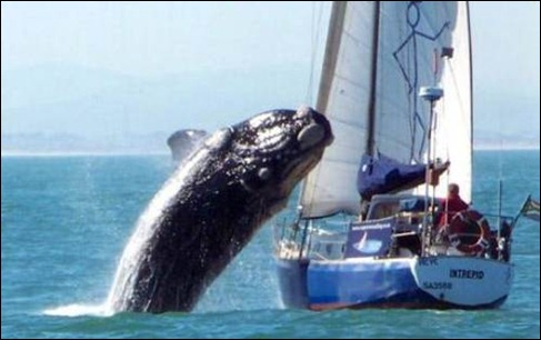 whalemeetsboat1