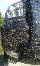 bugsonbug_110518