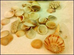 shells101029