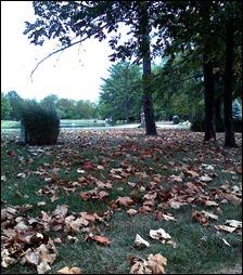leaves120902b
