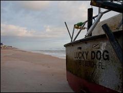 luckydog2