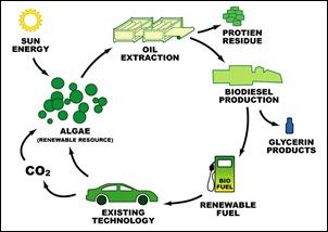 biodieselcycle
