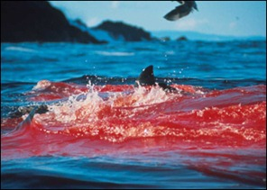 sharkblood