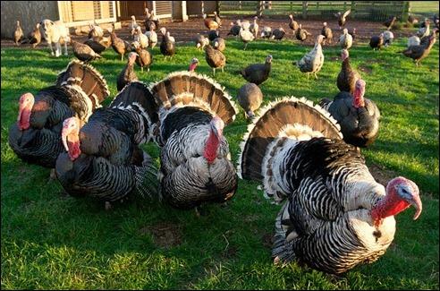 turkeyday111124