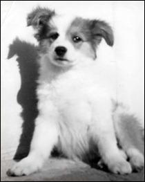 skippy_as_puppy