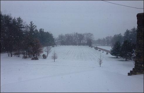 snowflakesIMG_2360