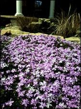 floxflowers130421