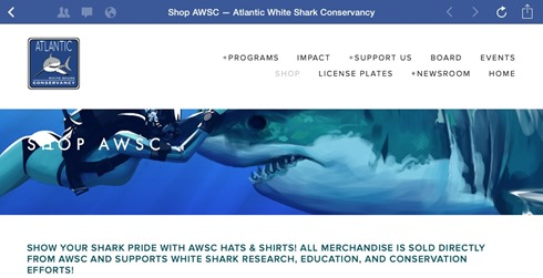 atlanticwhitesharkconservancy