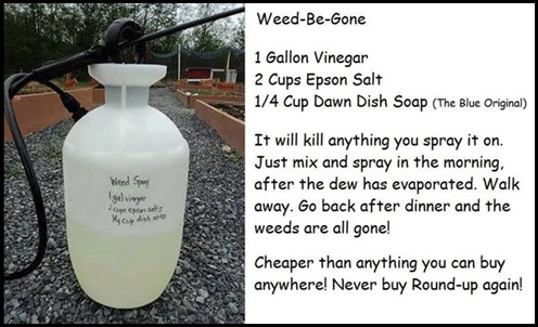 homemade_weedbegonespray