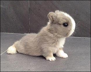 bunnyyoga