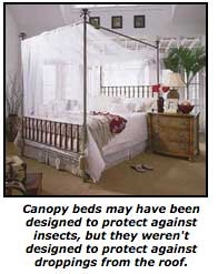 canapybed