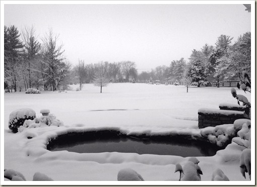 SnowBackyard160209bw