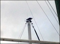 osprey160313
