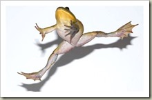 leapingfrog