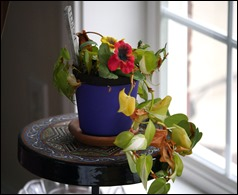 FlowerStill161207