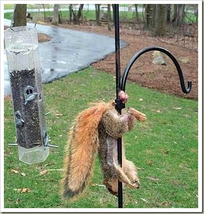 SquirrelHavingABadDayCrop