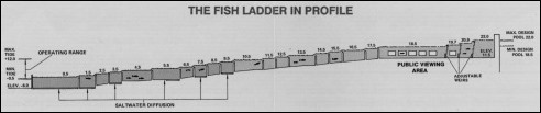 Lake_Washington_Ship_Canal_Fish_Ladder_pamphlet_-_The_fish_ladder_in_profile