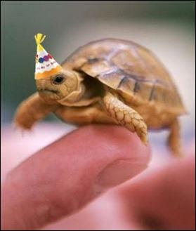 turtleCake