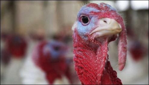 TurkeyDayGobbleGobble