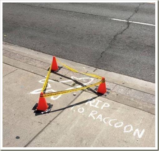 RIPRaccoon