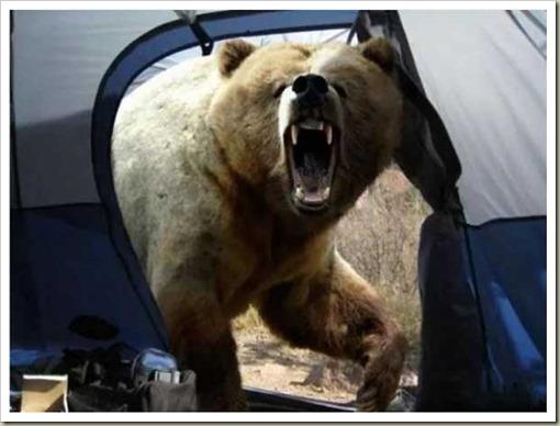 BearMaul