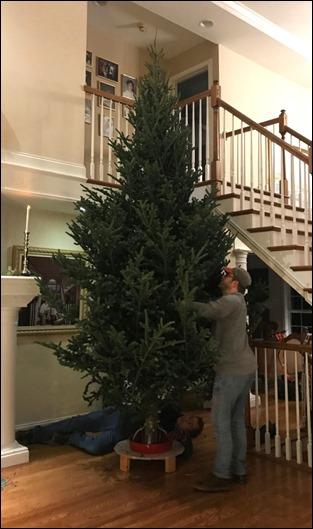 ChristmasTree15foot_2018