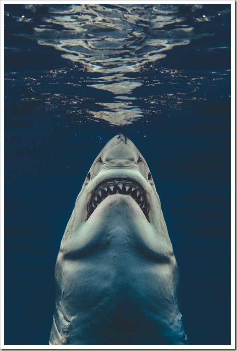 recreated-the-Jaws-movie-poster-7