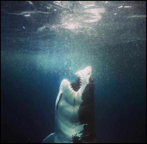 FeedingTime_Shark