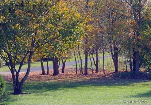 TreeTeaHousePlanning191102