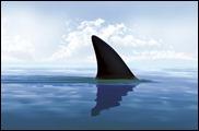 ff_shark