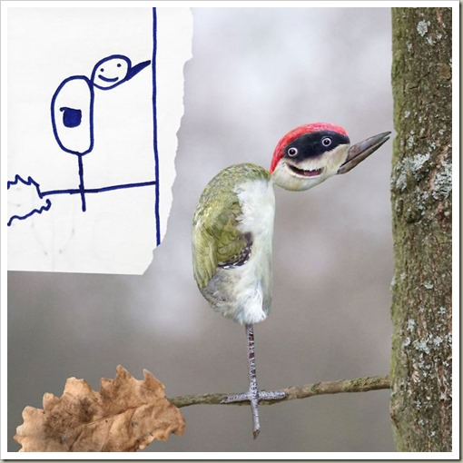 Woodpeckerkidsdrawing