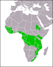 Stephanoaetus_coronatus_distribution_map_small_2