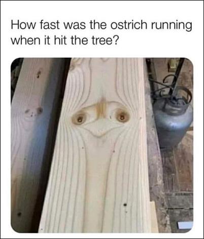 OstrichTree
