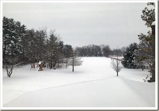 SnowyBackyard210209