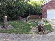 DrivewayProjectClearing2106