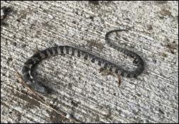 SnakeinPool210823